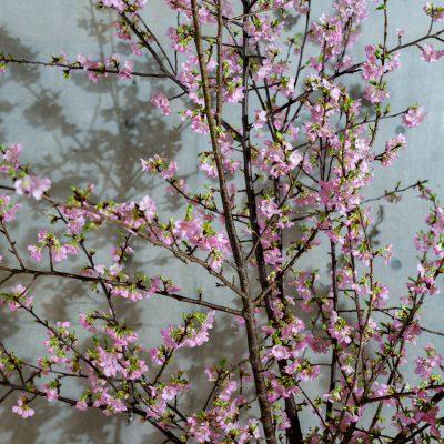 名古屋デザイン会社のオフィス装花